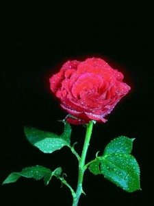 Flowers 0313